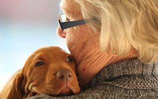 pet trust, estate plan, estate planning